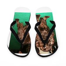 field spaniel full Flip Flops