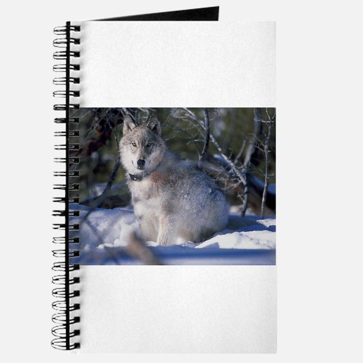 Cute White wolf Journal