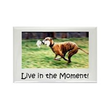 Greyhound Live in the Moment (magnet)