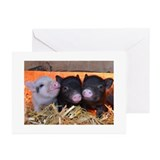 Pig Greeting Cards (20 Pack)
