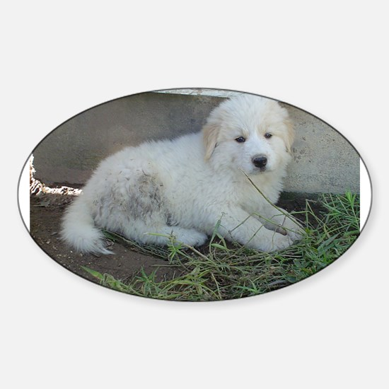 great pyreneese puppy Decal
