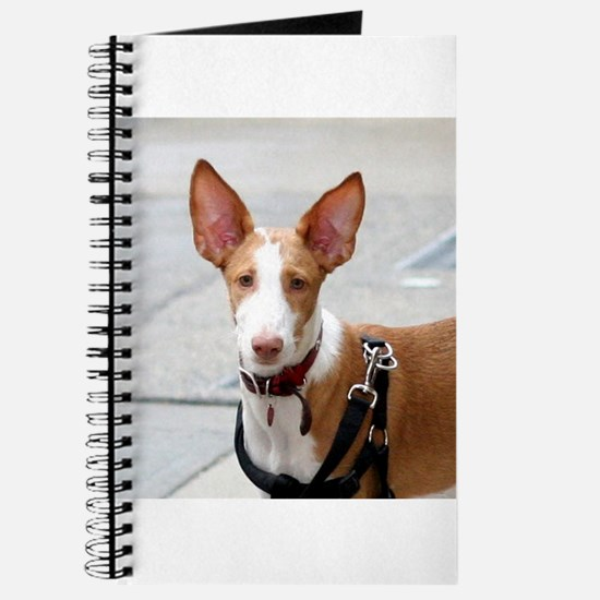 ibizan hound Journal