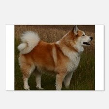 icelandic sheepdog full Postcards (Package of 8)