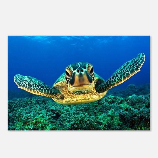 Unique Sea turtle Postcards (Package of 8)