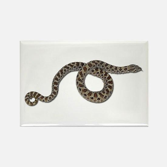 Hognose Snake Magnets
