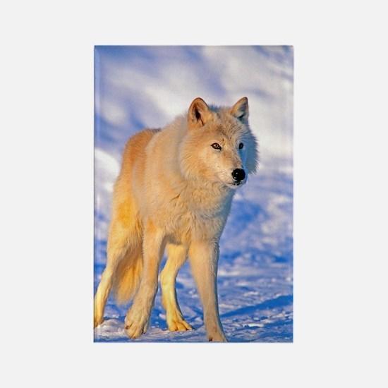 Cute Arctic tundra Rectangle Magnet