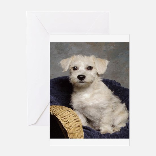 Schnoodle Time Greeting Cards