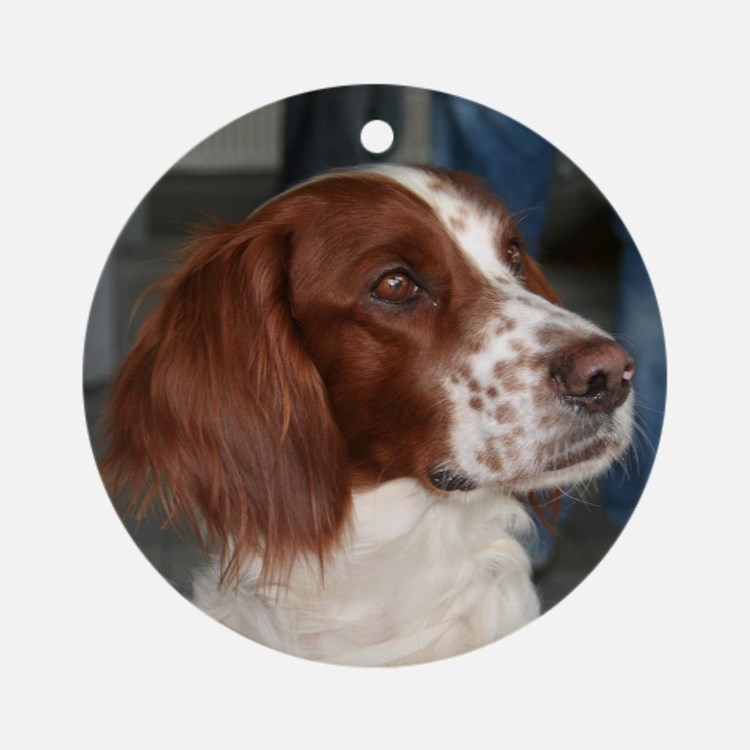 irish red and white setter Round Ornament