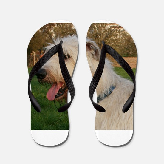 irish wolfhound cream profile Flip Flops