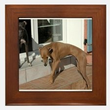 italian greyhound group Framed Tile
