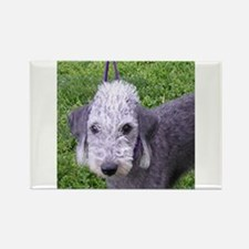 bedlington terrier grey Magnets