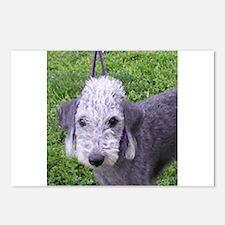 bedlington terrier grey Postcards (Package of 8)