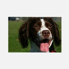 brittany spaniel Magnets
