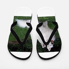 american eskimo full Flip Flops