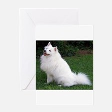 american eskimo full Greeting Cards