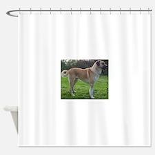 Anatolian Shepherd Dog full Shower Curtain