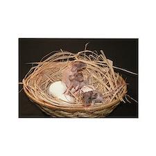 Rats Nest Rectangle Magnet