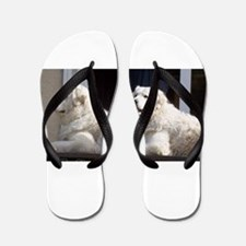 kuvasz group Flip Flops