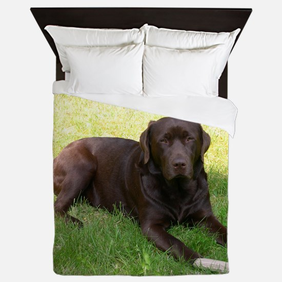 chocolate lab laying Queen Duvet