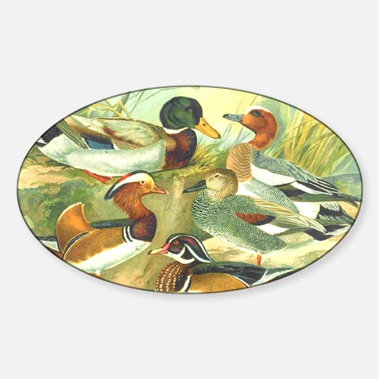 Duck Oval Decal