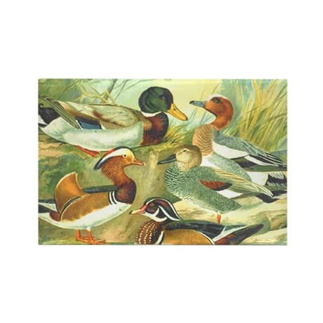 Duck Rectangle Magnet (10 pack)