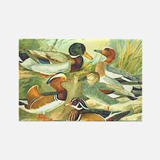 Duck Rectangle Magnet