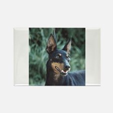 manchester terrier Magnets