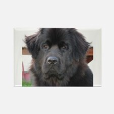 newfie 2 Magnets