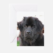 newfie 2 Greeting Cards