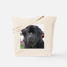 newfie 2 Tote Bag
