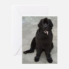newfie sitting Greeting Cards