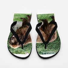 newfie 4 full Flip Flops