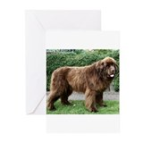 Newfoundland dog Greeting Cards (10 Pack)