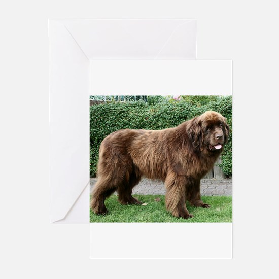 newfie 4 full Greeting Cards
