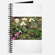 Tundra Flower Journal