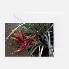 Air Plant Greeting Cards (Pk of 10)
