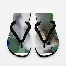 old english sheepdog Flip Flops