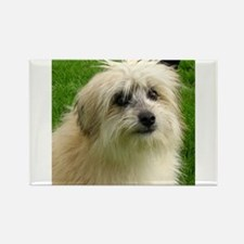 Pyrenean Shepherd Magnets