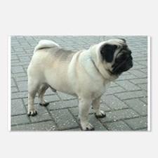 Pug full 6 Postcards (Package of 8)