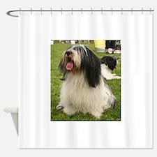 polish lowland sheepdog sitting Shower Curtain