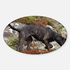 plott hound full Decal