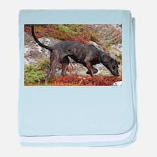 plott hound full baby blanket