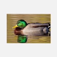Cute Duck water Rectangle Magnet