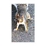 Squirrel Rectangle Sticker