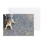 Squirrel Greeting Cards (Pk of 20)