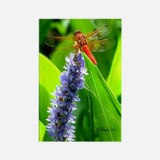 4022 Dragonfly Rectangle Magnet