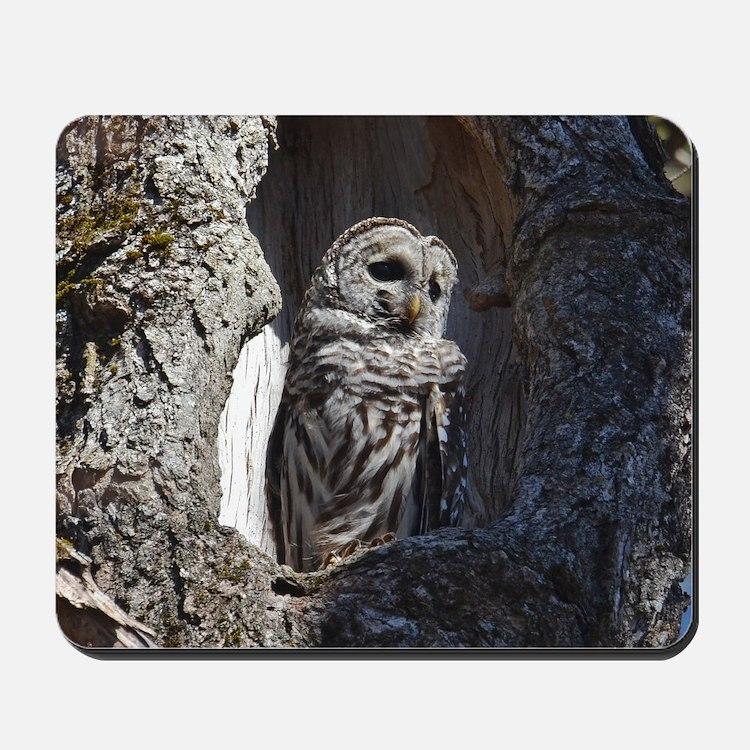 Owl in tree hollow Mousepad