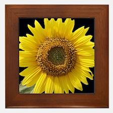 Sunflower w/ Blk Framed Tile