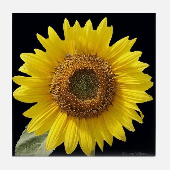Sunflower w/ Blk Tile Coaster