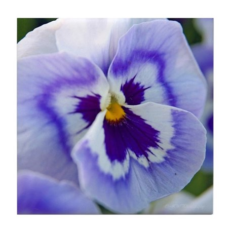 Pretty Purple Peekaboo Pansy Tile Coaster